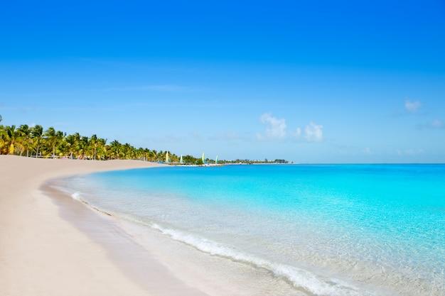 Palme della spiaggia di smathers di key west florida stati uniti