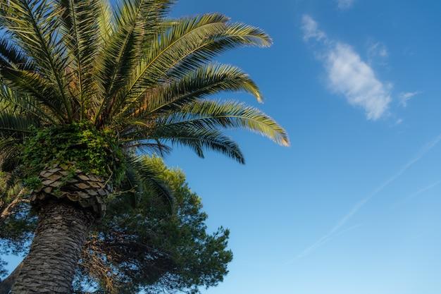 Palme su cielo blu e nuvole bianche. copia spazio