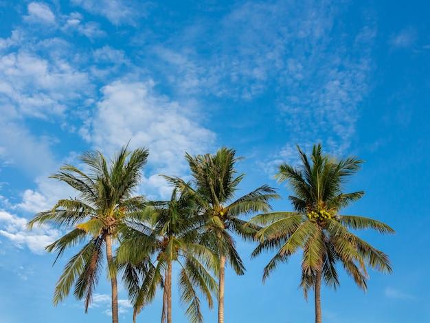 Palme sul cielo blu con nuvole.