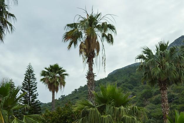 Palme sul fianco della montagna
