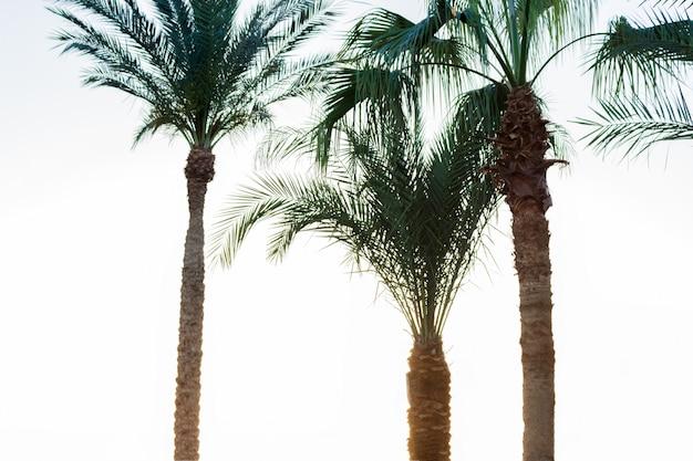 Palme sul fumo. post vintage elaborato. concetto di vacanza e spiaggia tropicale
