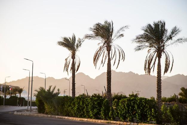 Palme sullo sfondo delle montagne al tramonto