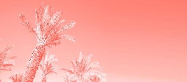 Palme tropicali sopra il cielo di colore di corallo. concetto di estate e viaggi. sfondo vacanza.