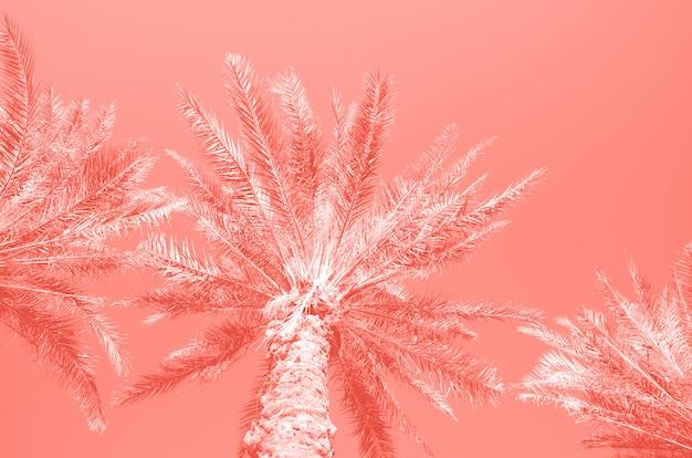 Palme tropicali sopra il cielo di colore di corallo. concetto di estate e viaggi.