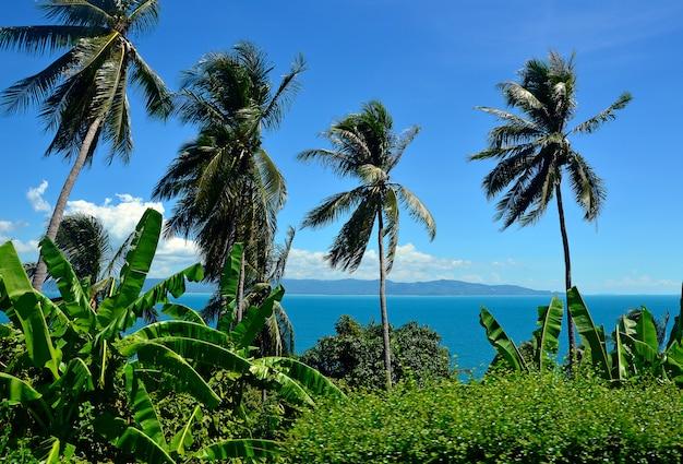 Palme verdi in spiaggia