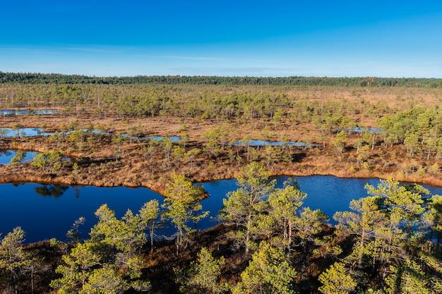 Palude sollevata in lettonia. parco nazionale kemeri. paesaggio
