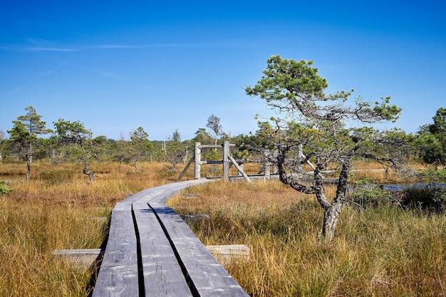 Palude sollevata. sentiero costiero nel parco nazionale di kemeri, lettonia. estate.