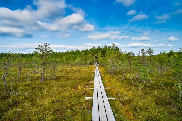 Palude sollevata. sentiero costiero nel parco nazionale di kemeri, lettonia.