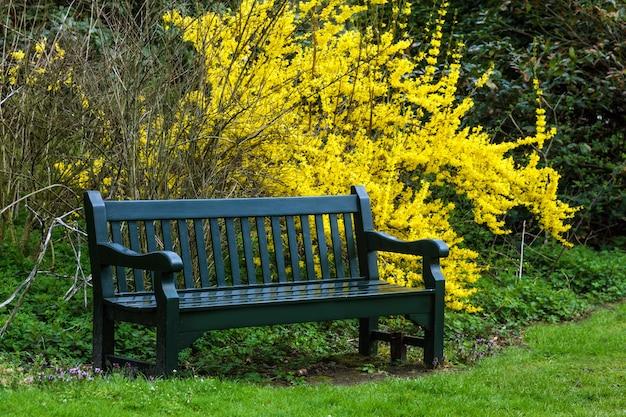 Panca da giardino e cespugli con foglie gialle