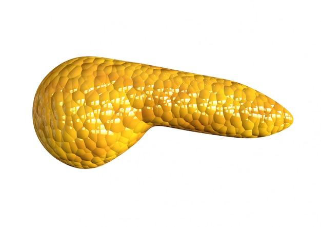 Pancreas, organo del corpo umano isolato su fondo bianco