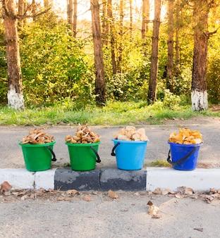 Panini con funghi freschi commestibili, miele di agarichi, finferli e giallo di elvik