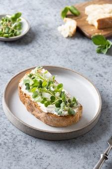 Panino su pane tostato con microgreen di ravanello fresco e crema di formaggio su gray. avvicinamento.
