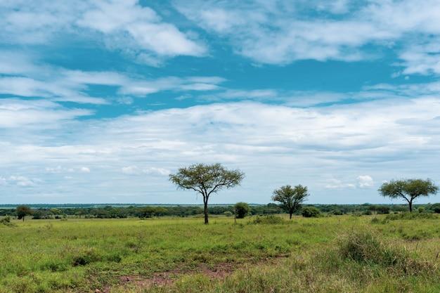 Panorama africano nel parco nazionale del serengeti
