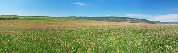 Panorama di primavera prati