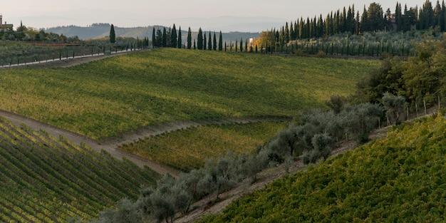 Panoramica dei vigneti, gaiole in chianti, toscana, italia