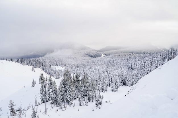 Panoramica delle montagne piene di neve bianca e un sacco di abeti rossi sotto un cielo
