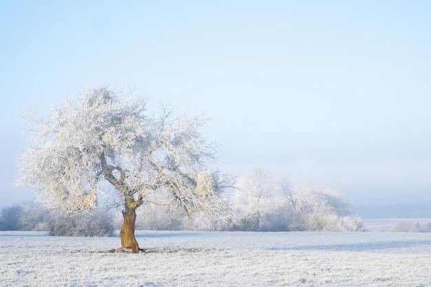 Panoramica di un albero isolato coperto di neve in una zona nevosa. proprio come una fiaba