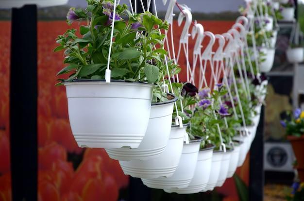 Pansies fiori in vasi sospesi nel negozio