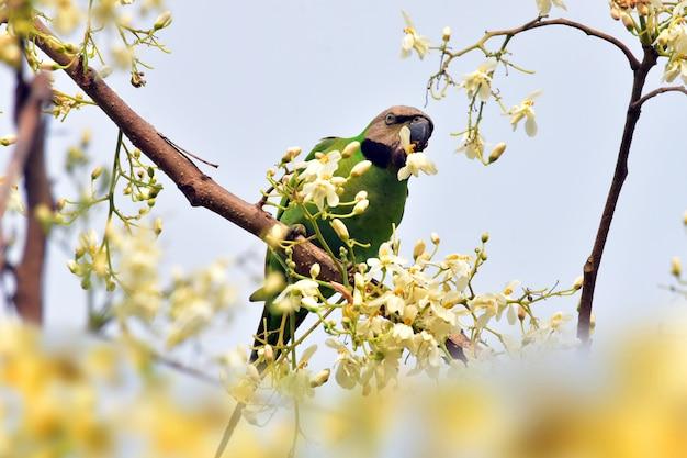 Pappagallo al ramo di un albero con fiore
