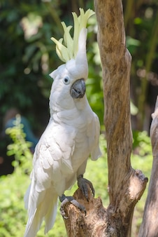 Pappagallo bianco su un ramo di albero