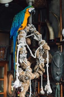 Pappagallo blu-e-giallo dell'ara, uccello esotico variopinto a coda lunga che sta sull'albero con le corde nel distretto di yuchi, la contea di nantou, taiwan.