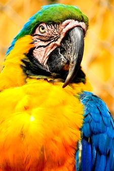 Pappagallo forma la giungla amazzonica