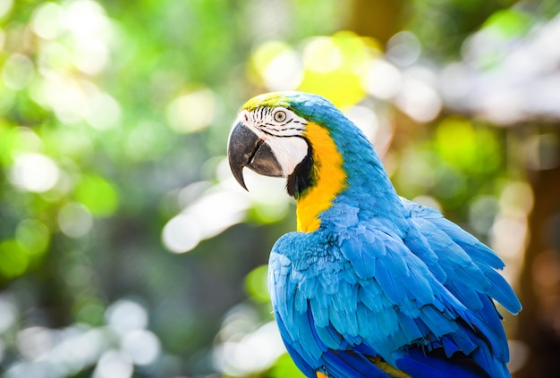 Pappagallo variopinto dell'uccello del macaw sull'albero del ramo sul fondo di verde della natura