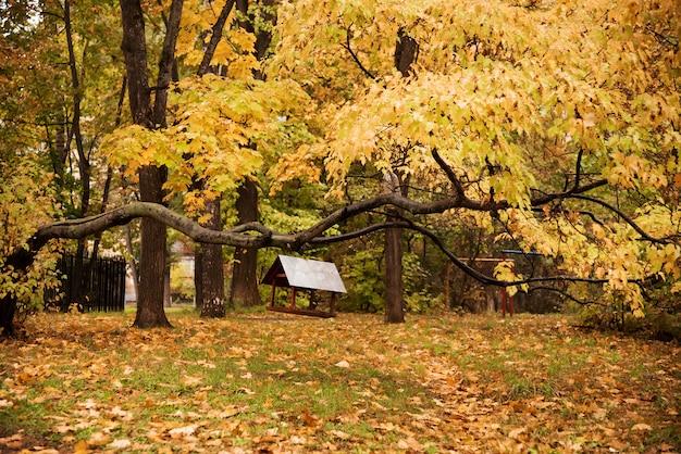 Parco autunnale. alberi e foglie di autunno.