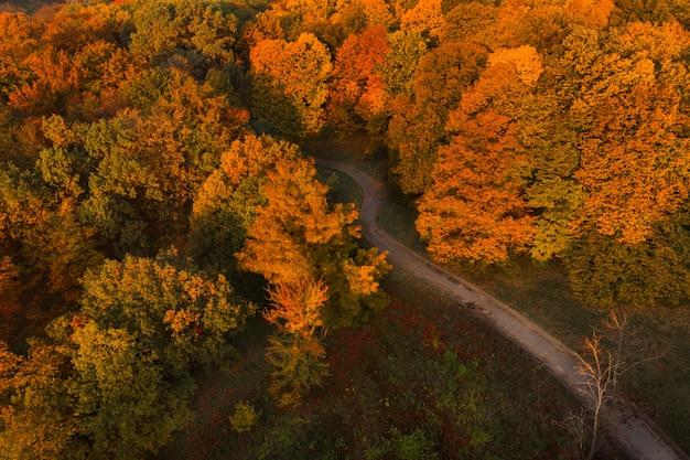 Parco d'autunno con vista aerea drone vicolo