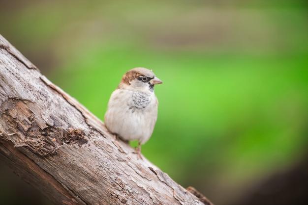 Parco degli uccelli ornitologia passeri aviaria