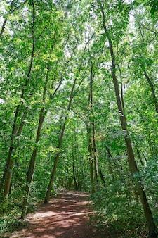 Parco naturale unesco bergstrasse odenwald germania