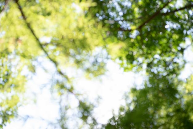Parco sfocato, verde vibrante naturale