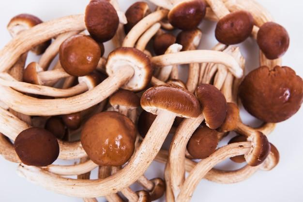 Parecchi funghi di shiitake freschi isolati su fondo bianco
