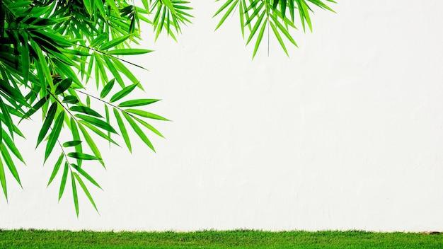 Parete del cemento bianco e foglie di bambù - fondo