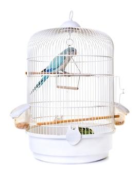 Parrocchetto monaco nella gabbia per uccelli
