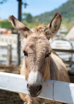 Parte anteriore del cavallo o asino nella fattoria. testa di cavallo marrone o asino in stall.er.