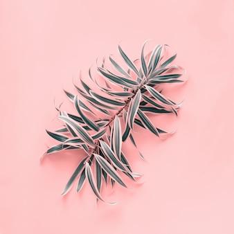 Parte superiore piana di disposizione della foglia di palma del ricciolo tropicale