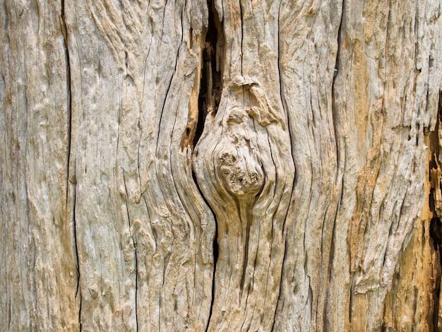 Particolare del primo piano di vecchio legno incrinato strutturato della corteccia incrinato
