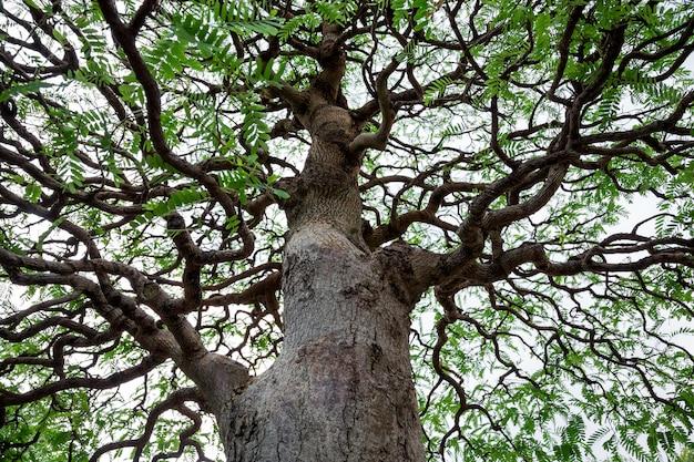 Particolare di una filiale di un albero su una priorità bassa bianca.