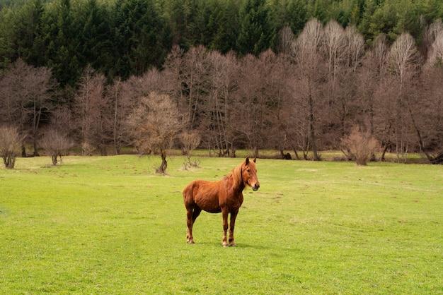 Pascoli verdi di allevamenti di cavalli. paese paesaggio estivo