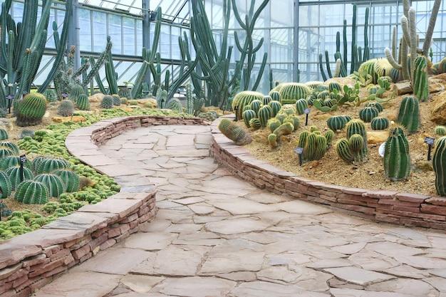 Passerella e giardino di cactus