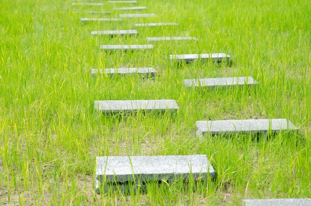 Passerella in calcestruzzo aerato per attraversare il campo di riso verde