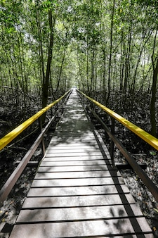 Passerella in legno tra la foresta di mangrovie