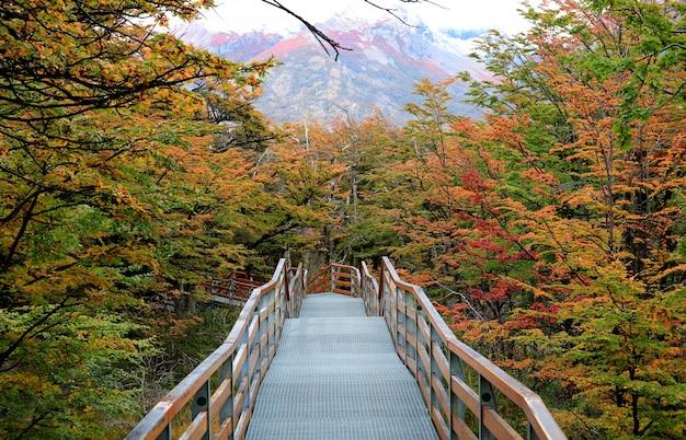 Passerella tra belle foglie d'autunno nel parco nazionale los glaciares, patagonia, argentina
