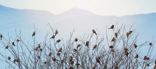 Passeri sui rami degli alberi. molti uccelli tra gli alberi. uccelli su uno sfondo di montagne.