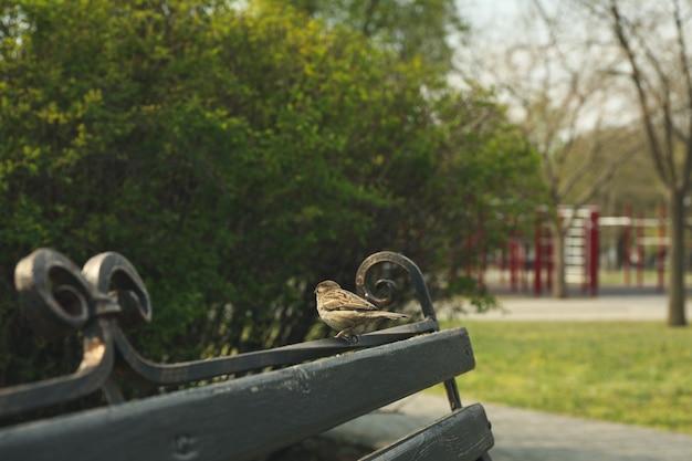 Passero che si siede sulla panchina nel parco. primavera