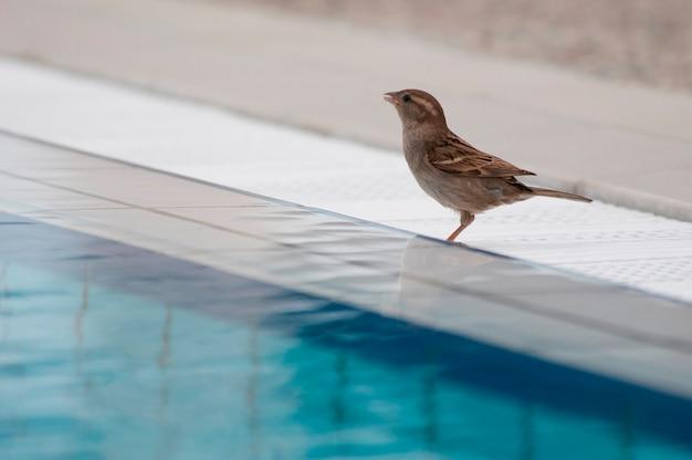 Passero sul lato di una piscina