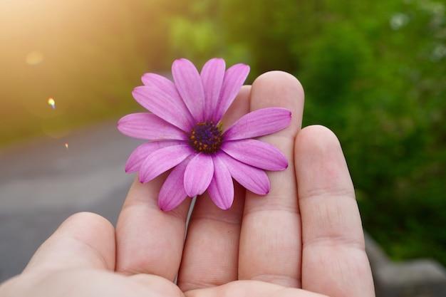 Passi con un bello fiore rosa nella natura, mano dell'uomo con i fiori