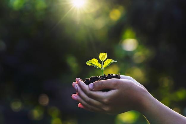 Passi i bambini che tengono la plantula con luce solare sulla natura verde. concetto di eco giornata della terra