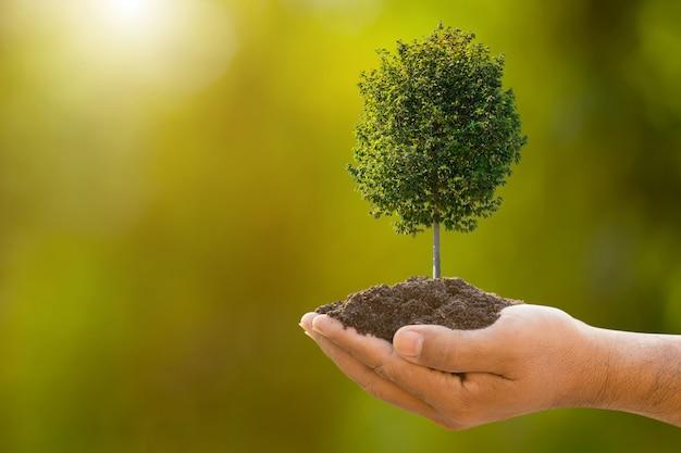 Passi il terreno della tenuta e i giovani dell'albero tropicale sulla sfuocatura verde del giardino. concetto di crescita e ambiente